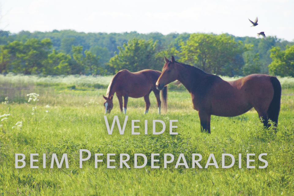 Weide Pferdepradies Freienhagen Video